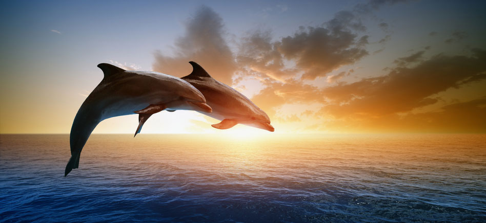 Two Bottlenose Dolphins at Sunrise