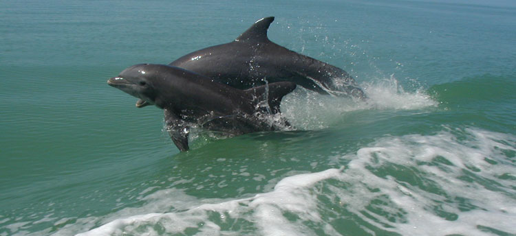 Mother and Baby Bottlenose Dolphins