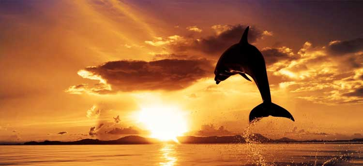 Ocean Sunset with Dolphin Jumping
