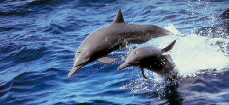 Pictures of Dolphins at Dolphinkind
